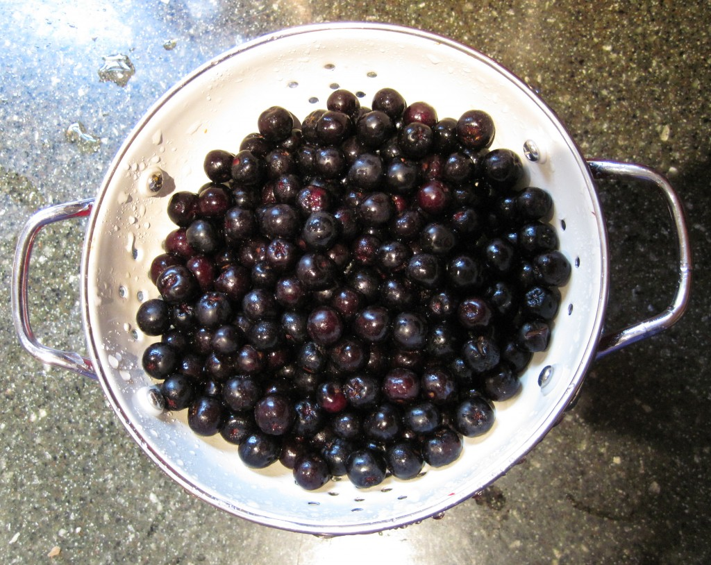 Black-red berries in a colander
