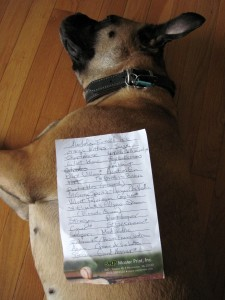 A list of alcohols lying on top of Greta the dog