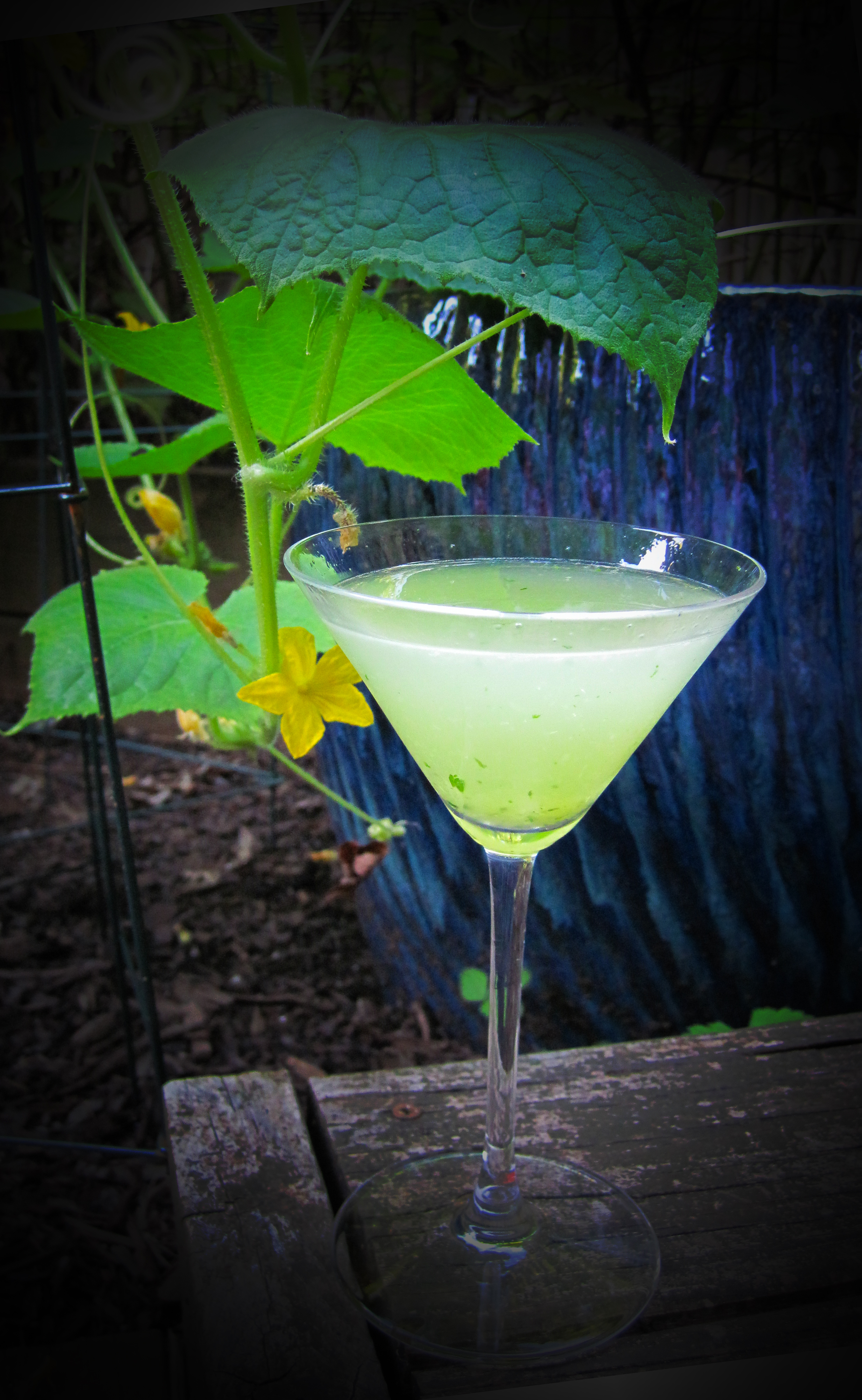 Light green martini with cucumber vine in the background