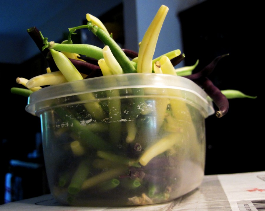 Plastic container of yellow, purple and green beans